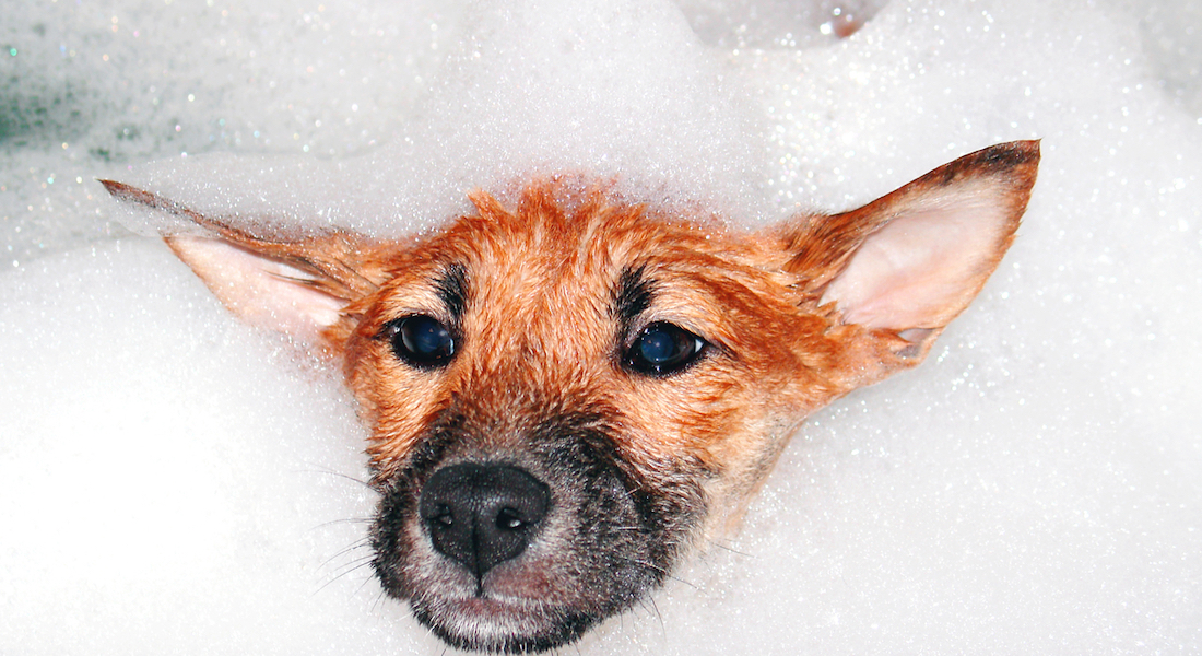 Dog having a foam bath